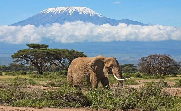 Best Time to Visit Amboseli National Park