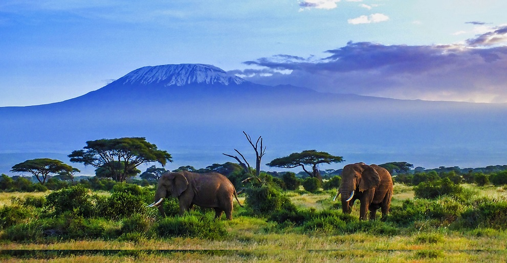 Amboseli National Park Budget Safari